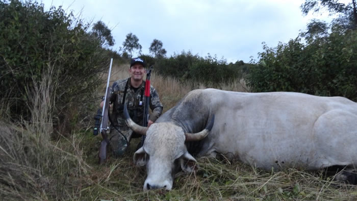 scrub bull, High Country Hunting Safaris